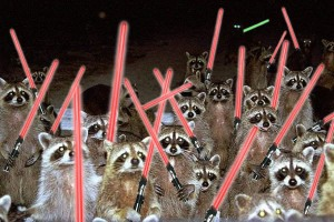 Raccoons. Organized. With Light Sabers.