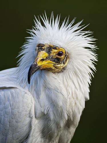 perplexed bird